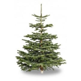Juletræ i Normannsgran inkl. hjemme-levering